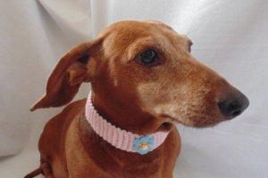 Робота Розовый с цветком ошейник для собаки или кота