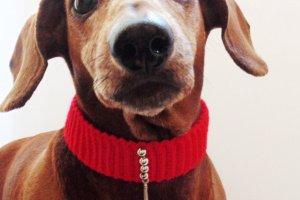 Красный ошейник для собаки или кота - ІНШІ РОБОТИ