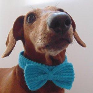 Робота Ошейник бант для собаки или кота голубой